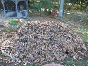 cover bed with leaves