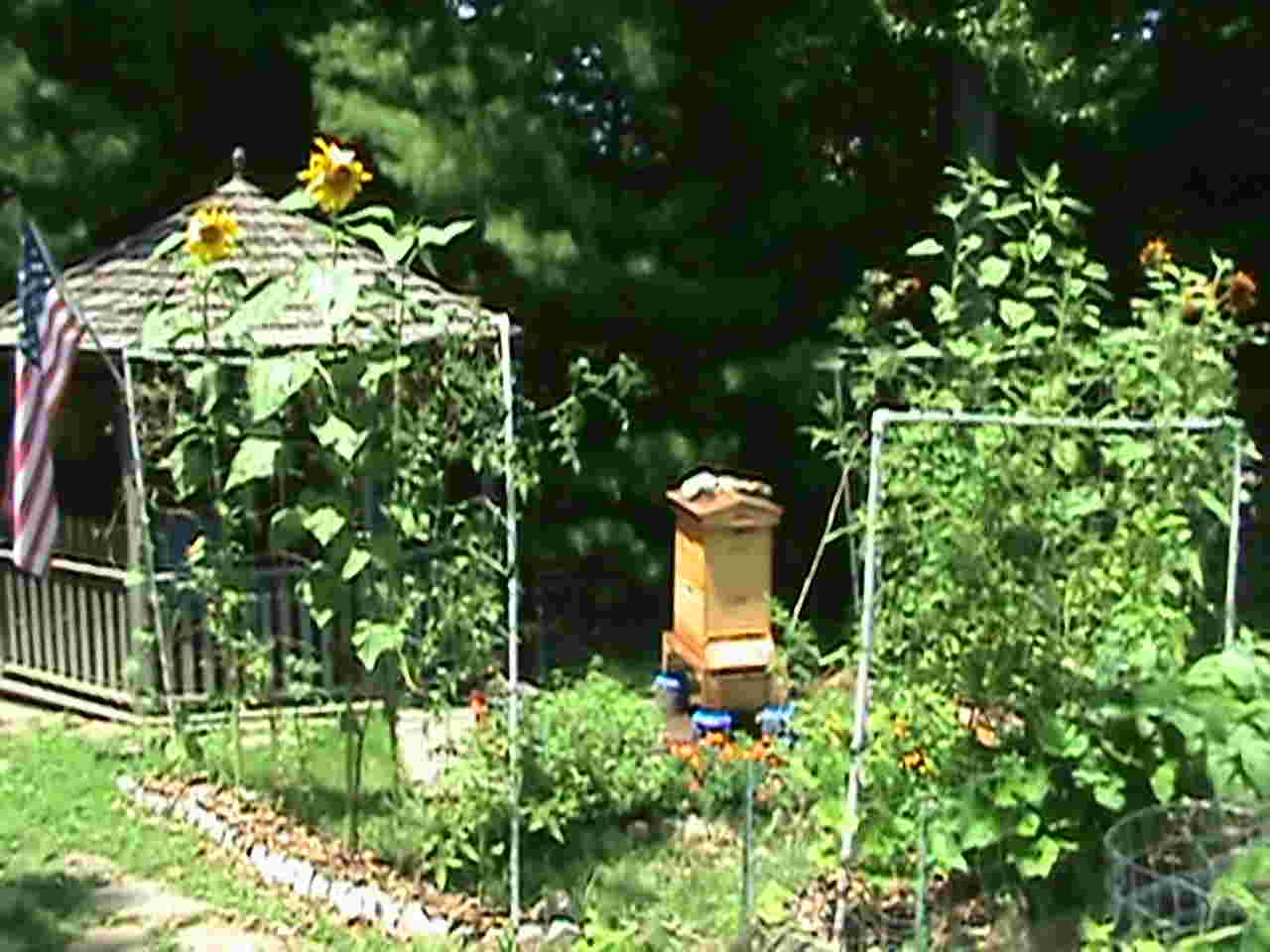 Grow more tomatoes with vertical gardening for Grow vertical garden