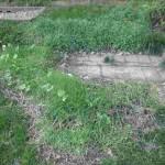 grass repair