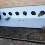 Honey Bees outside the hive in winter