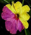Funky Flower 2