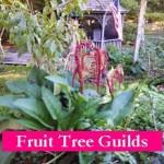 Peach Tree Guild