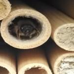 Mason Bee At Home