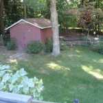 Backyard Pre Permaculture