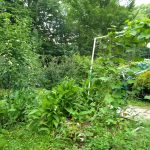 backyard permaculture 2018
